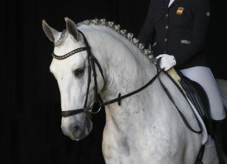 ANCCE | PRE gains protagonism at the World Young Horse Championship (CH-M-D-YH)