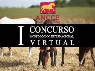 ANCCE | List of Horses Entered and their Bib Numbers for the 1st ANCCE International Virtual Conformation Competition