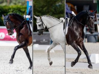 ANCCE | Three PREs pre-selected for the FEI Dressage European Championship for Youth
