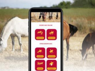 ANCCE | The Latest Improvements of the ANCCE Competition Web App Allows you to Consult a Horse's Progeny and Siblings